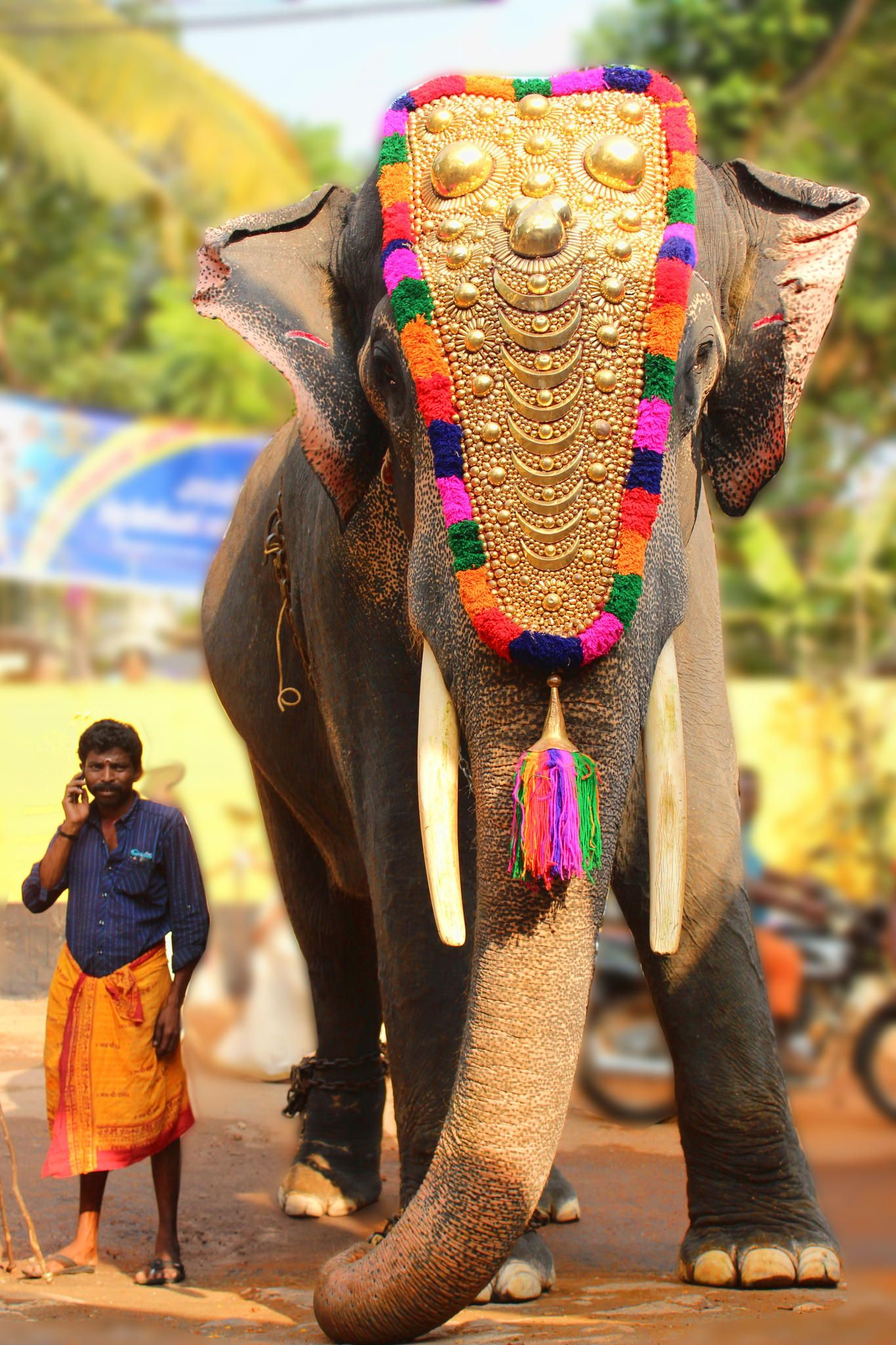 Jours 4 : Munnar – Periyar