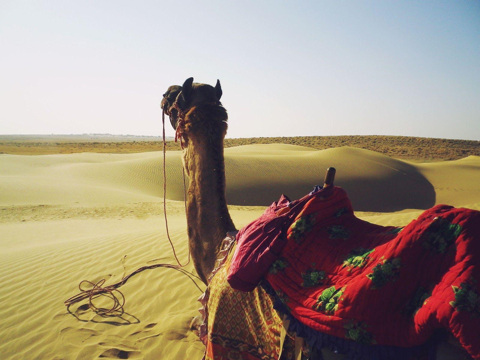 Jour 3: Jaisalmer - À la croisée de l'Orient et l'Occident à Jaisalmer