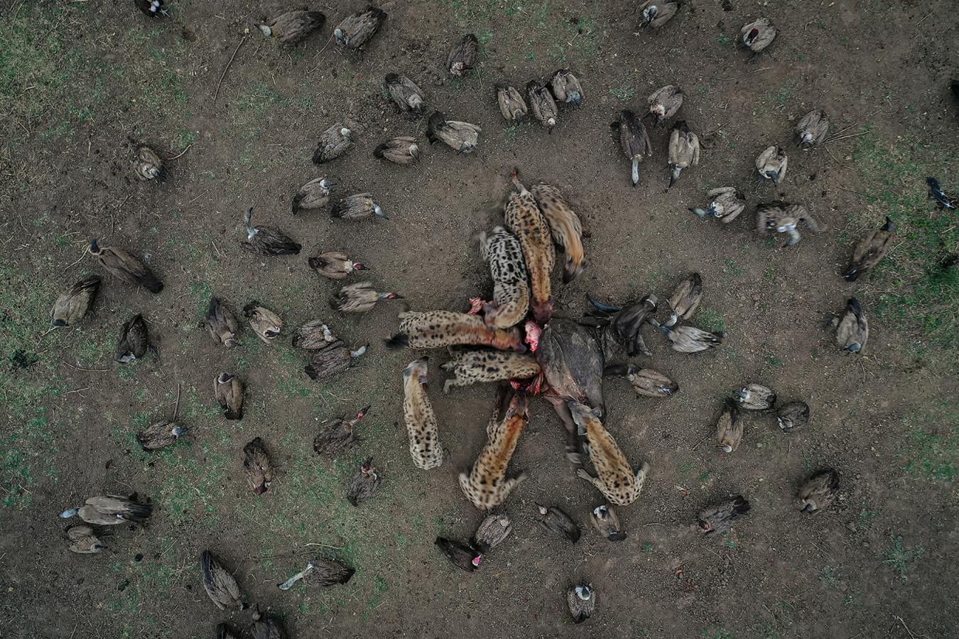 Fotos dron animales